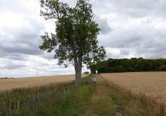Shelford Road to Maggot's Mount