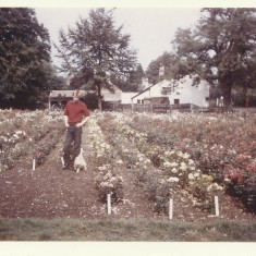 Nov 1967. Stocker's Roses, the Three Horseshoes in the background. | (Stocker)