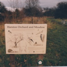 Orhard & Meadow 1995  | (Deacon)