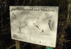 Community Orchard & Conservation Meadow
