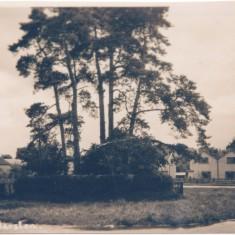 Swan Green post 1921 | (Deacon)