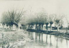River Rhee