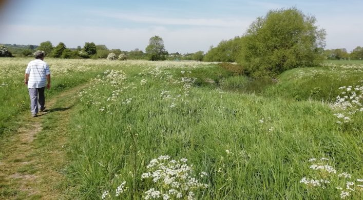 A walk along a Harston field edge path by River Cam 11 May 2020