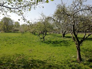 Orchard behind new Plymouth Brethren Hall looking to west; once Apple Cottage 2020 | (Roadley)