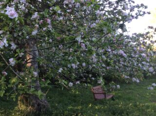 Community Orchard Harston 2020 | (J Elmes)