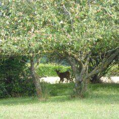 Deer at end of garden | (M Hughes)