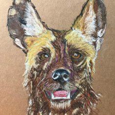 African wild dog | (Olivia Clarke)
