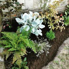 Kelcy's garden flowers | (K Davenport)