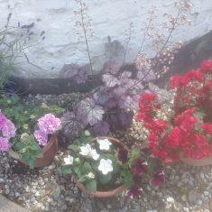 More of Kelcy's new flowers | (K Davenport)