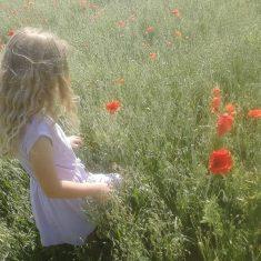 Exploring poppy fields | (K Davenport)