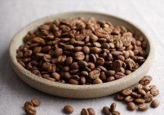 Cocobolo Coffee Roasters